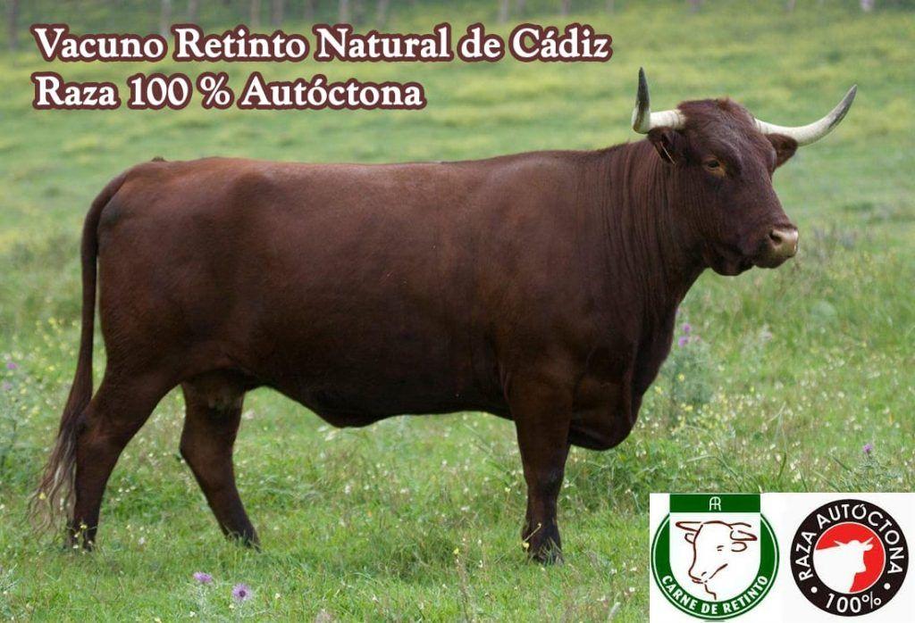 Carne de vaca retinta.