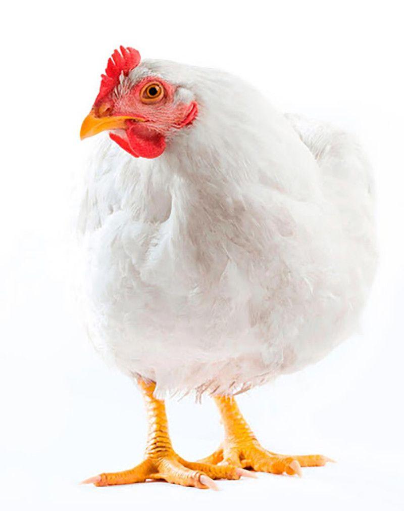 Venta de carne de pollo a domicilio.