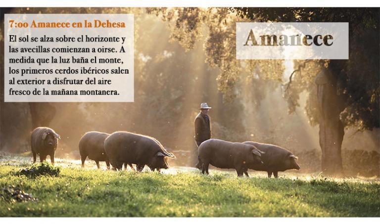 Cerdo ibérico criado en la montanera de Huelva.
