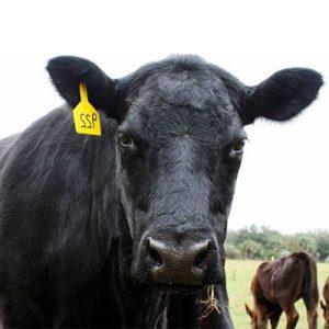 Carnes de vaca angus a domicilio.