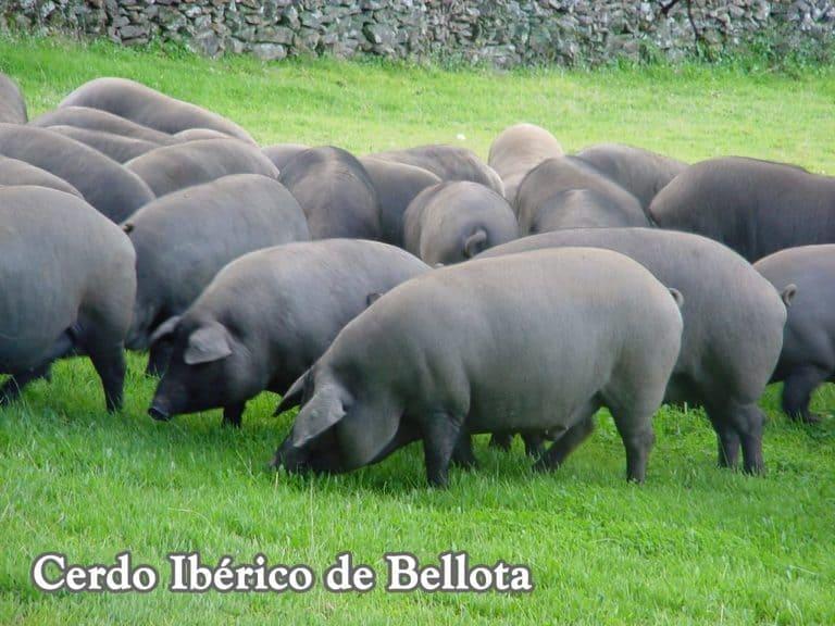 carnes-de-cerdo-iberico-de-bellota
