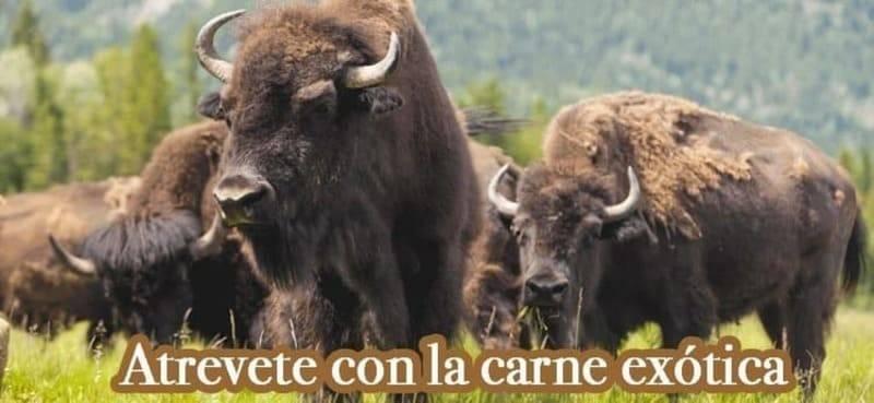 Compra venta de carne exótica de búfalo