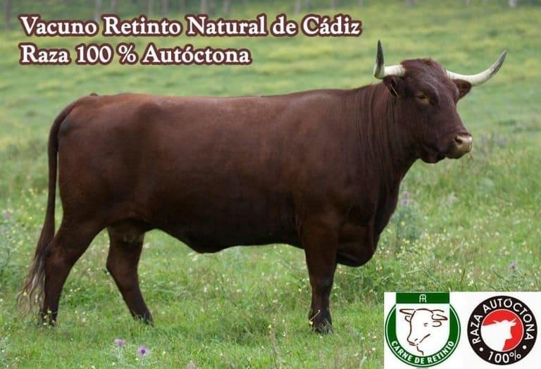 vaca-retinta