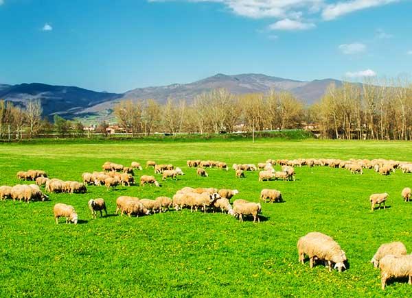 Animales pastando en el campo