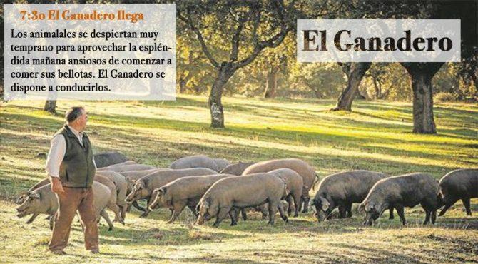 Ganadero Llevando el cerdo a la bellota.